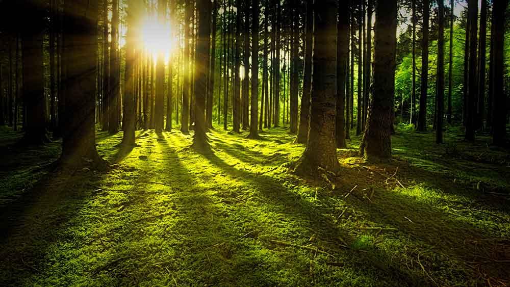 Waldwertermittlungsrichtlinien Gutachter